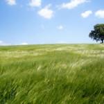 éthylotest chimique toxique pour l'environnement